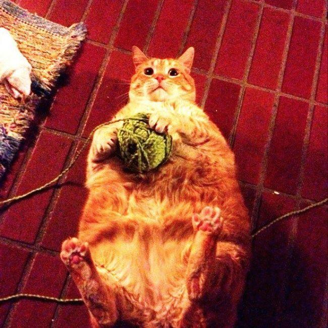 Смешные коты движущиеся картинки