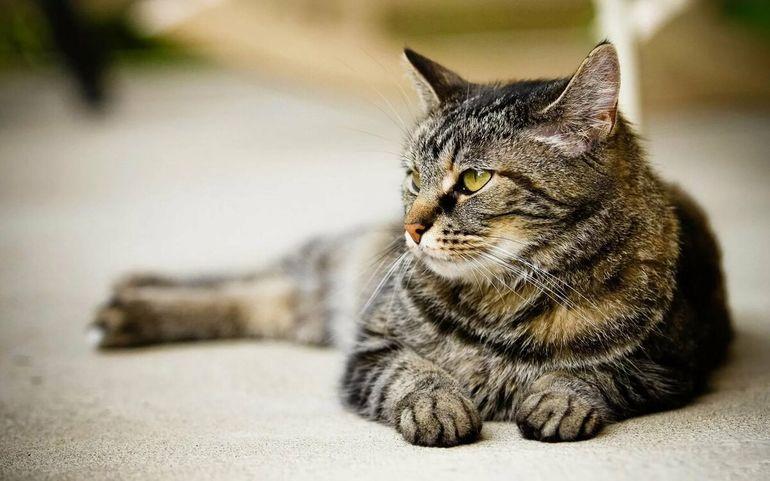 Откуда взялось слово «кошка»: почему мы зовем наших любимцев именно так?