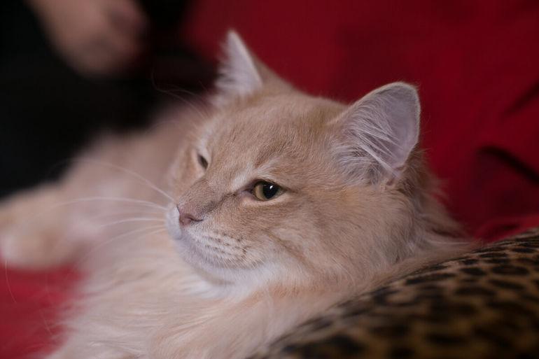 Почему кошки мурлыкают? В чем польза для человека?