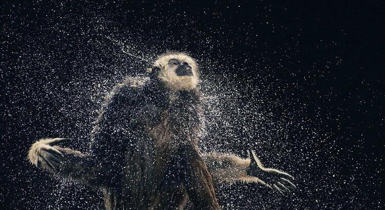 9 потрясающих фотографий животных