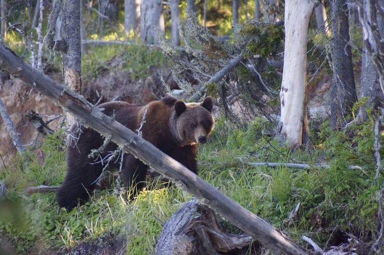 Три главных правила, чтобы недопустить встречу с медведем в лесу