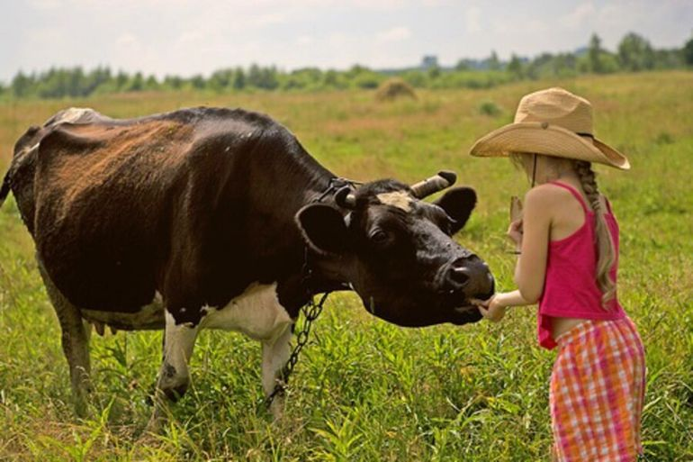 Как корова девочку спасла