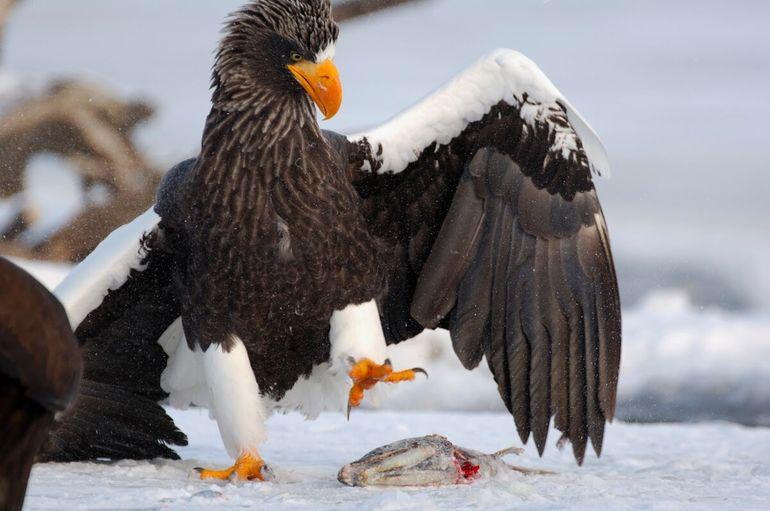 Ну очень забавные фото животных — таких вы еще не видели!