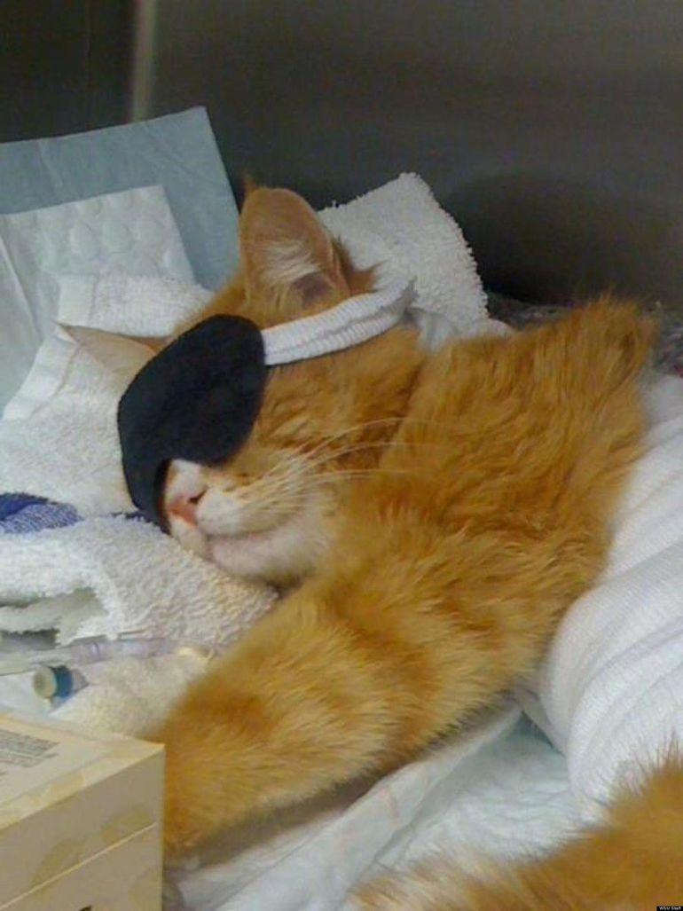 Смешные фото спящих котов и кошек