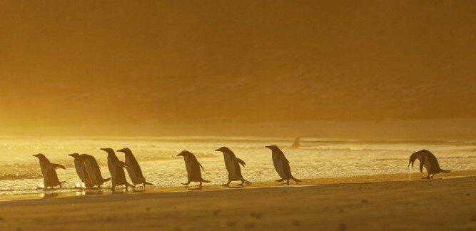 Сплетничающие львы, застрявший енот, пингвин с похмелья и другие смешные финалисты