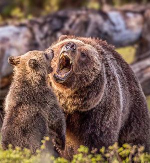 Смех, да и только: 11 животных, которые познали радость материнства