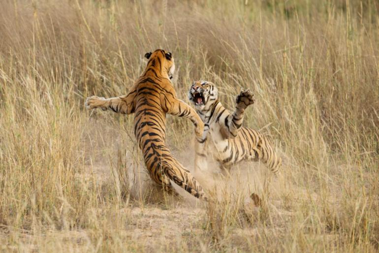 15 снимков National Geographic, на которых запечатлены удивительные моменты