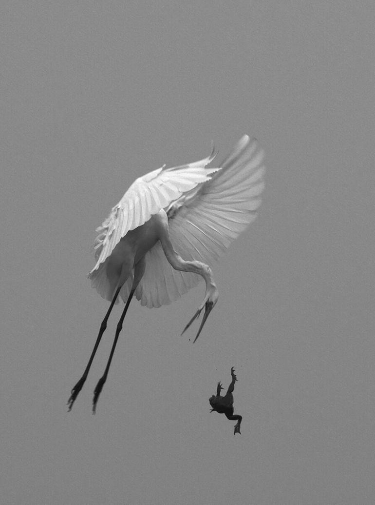 14 черно-белых фото, красота которых завораживает