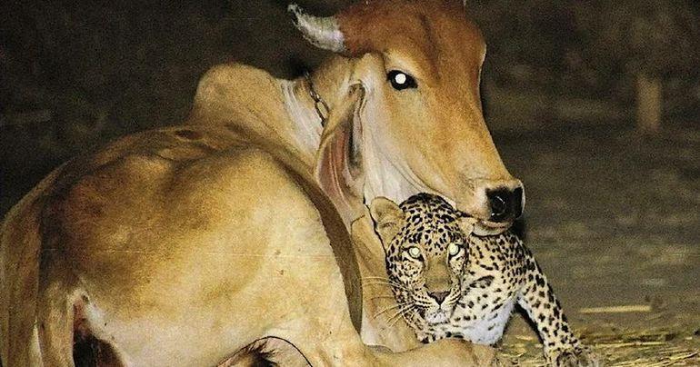 Родители и малыши. Самые любящие и терпеливые мамы и папы животного мира. Подборка добрых фотографий