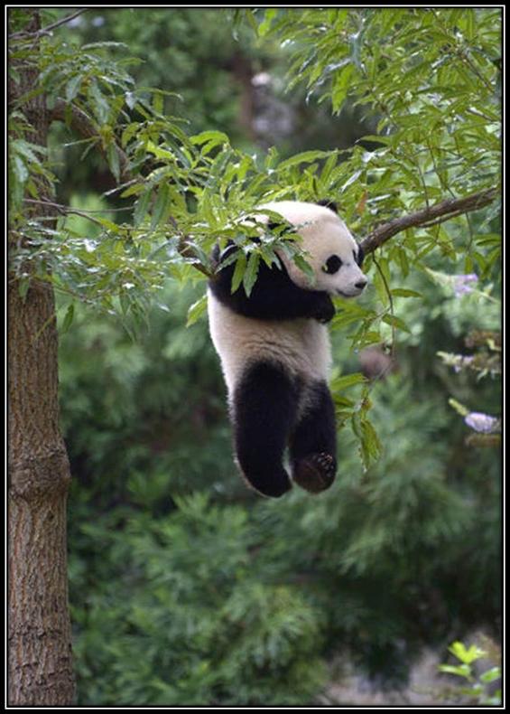 Волшебство дикой природы: 15 фото, которые успокаивают и умиротворяют
